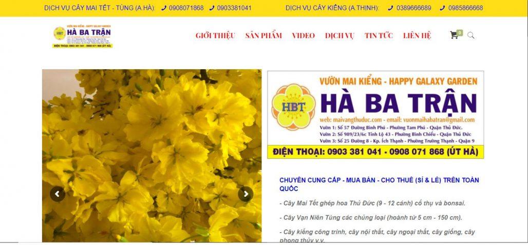 Công ty cho thuê mai ngày tết Vườn Mai Kiểng Hà Ba Trận (ÚT HÀ)