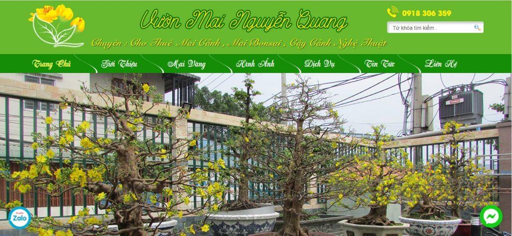 Công ty cho thuê mai ngày tết Nguyễn Quang