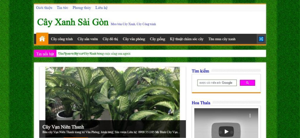 Công ty cho thuê mai ngày tết Bình Nguyên