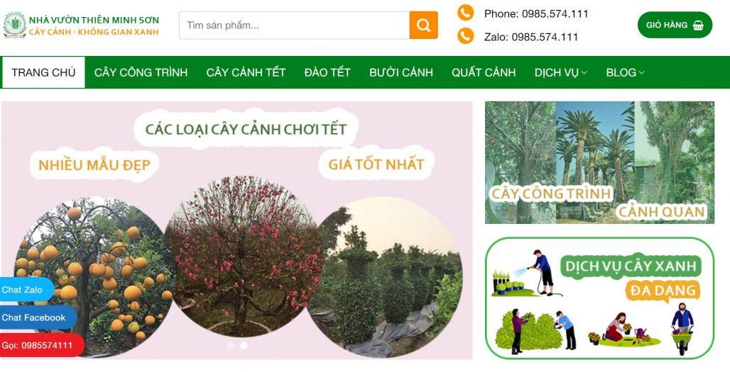 Công ty cho thuê cây cảnh chơi Tết Thiên Minh Sơn