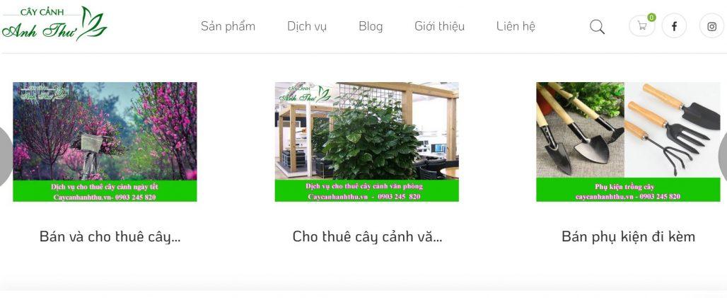 Công ty cho thuê cây cảnh chơi Tết Anh Thư
